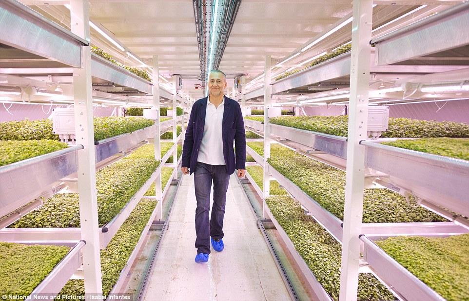 Plantaciones subterraneas Londres